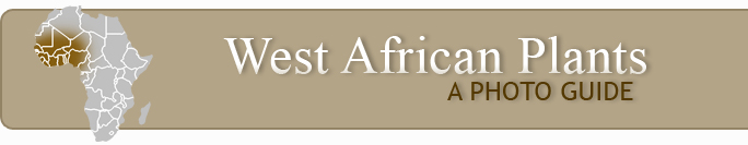 West African PLANT DATABASE