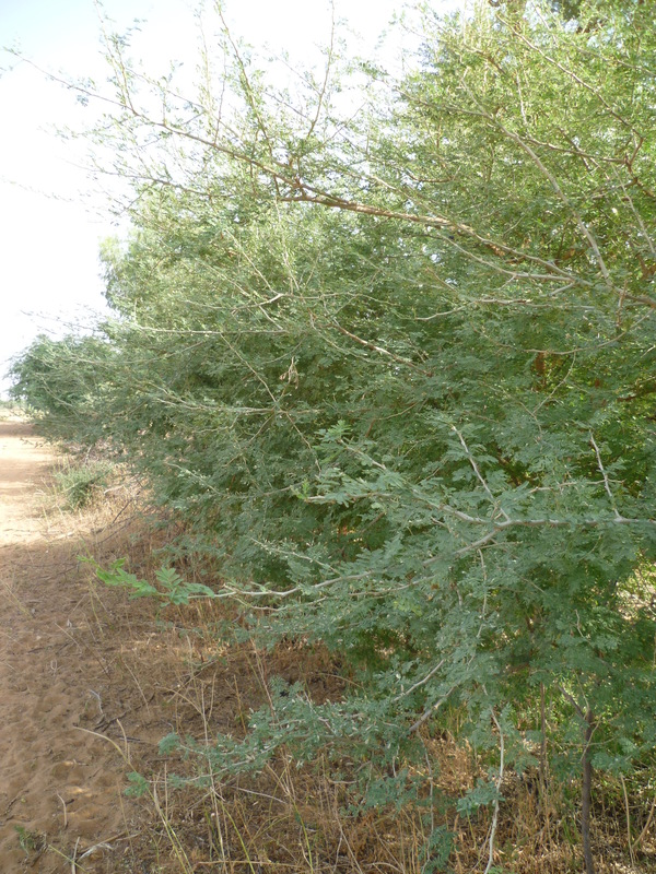 west african plants - a photo guide